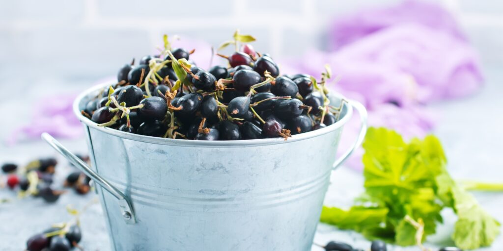 Blackcurrants in a bucket