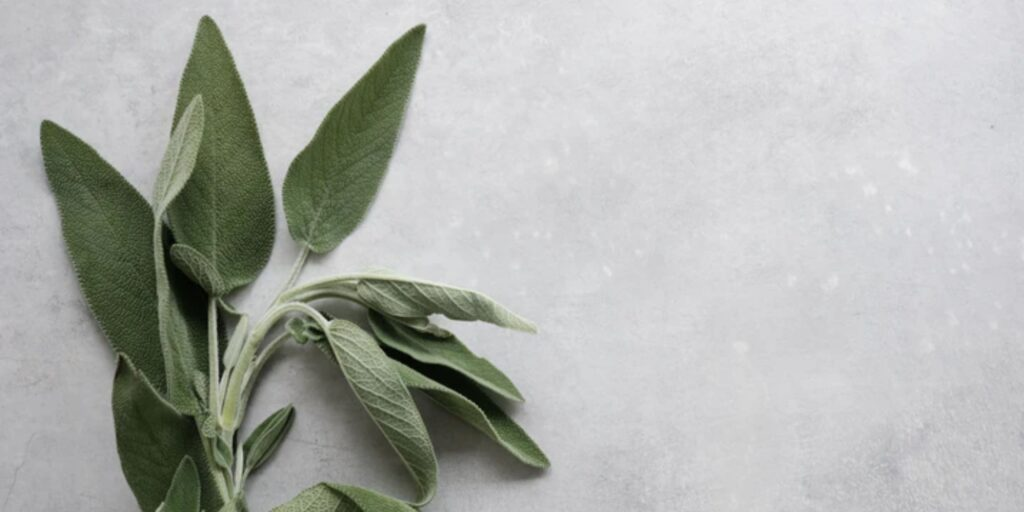 Sage on a counter